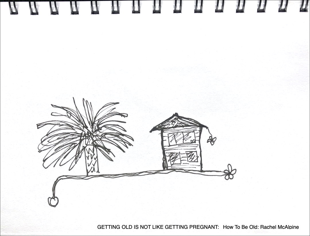 cartoon: big palm tree beside old house with daisies
