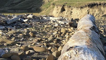 Large log washed up on a stoney beach.