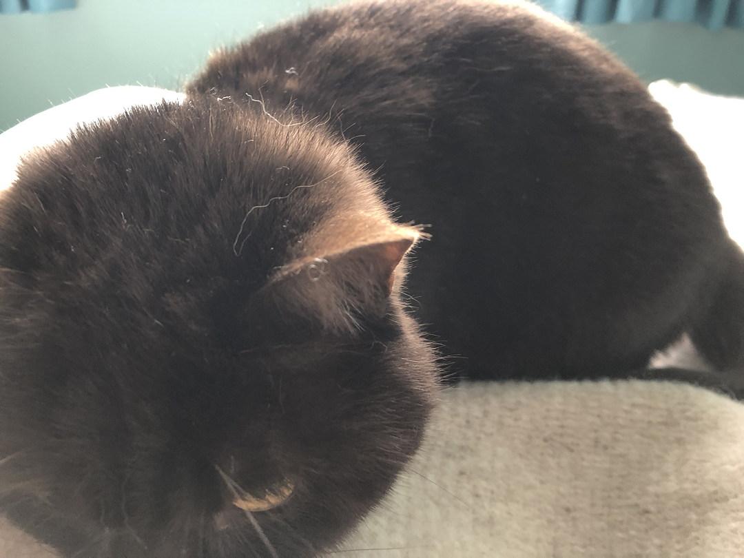 close-up poto of cat sulking