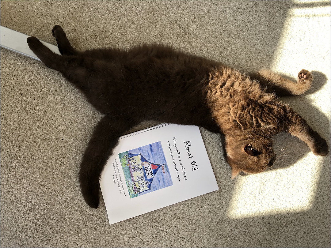 cat stretching in sun beside a workbook, Almost Old