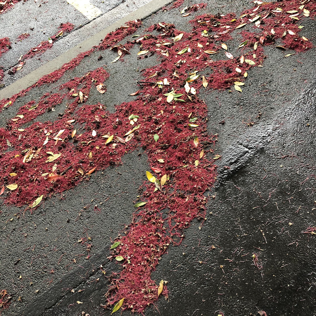 Pohutukawa flowers and leaves forming the shape of a running man