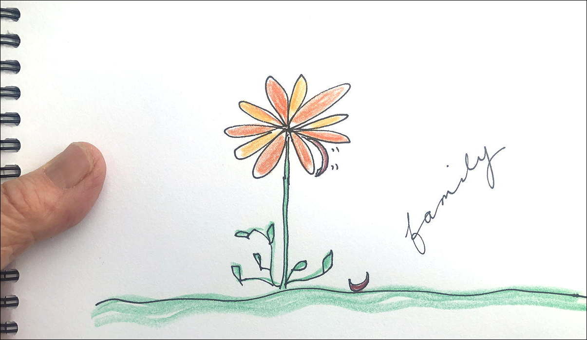 Drawing of a flower with 10 strong petals, one on the ground, one about to fall