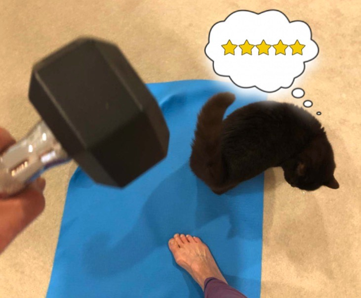 Cat on awards five stars to yoga mat. with handweight and foot