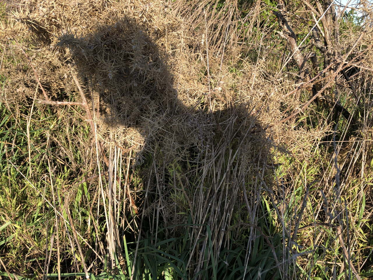 photo of person with troll hair on dead gorse