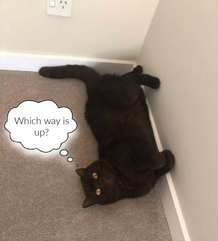 cat trying to climb a wall indoors