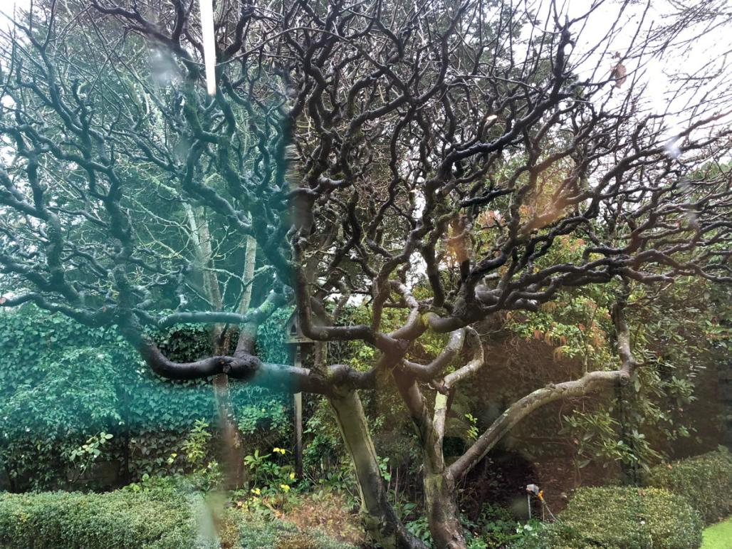 bare tangled winter tree with other bushes, bird feeder and confusing light effects,