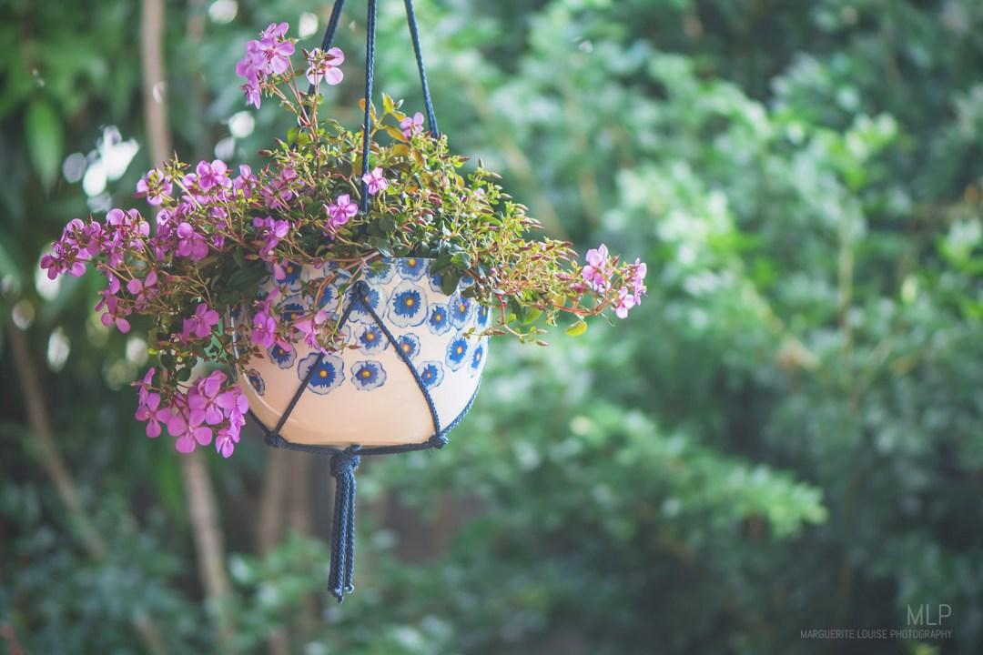 planter, hanging planter, hanging plant