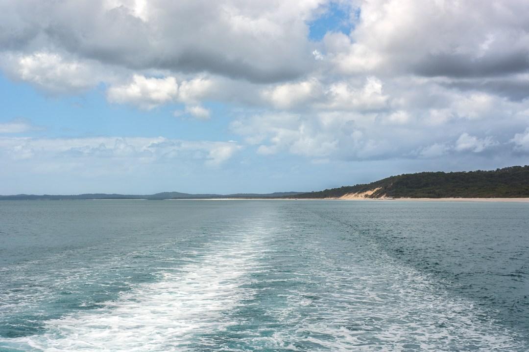 whale, whales, whale watching, hervey bay, queensland, australia, boat, frazer island,