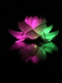 Nightfest Lotus Flower
