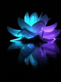 Nightfest Lotus Flower 3