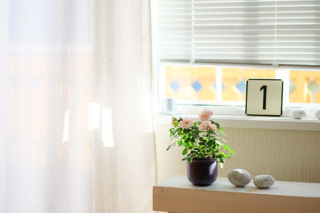 No. 1 sitting on a windowsill