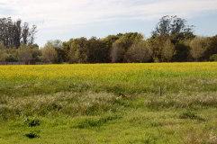mustardweb
