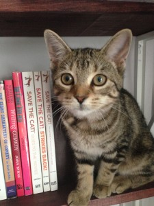 I've read all the Save The Cat books. Can I critique your manuscript?