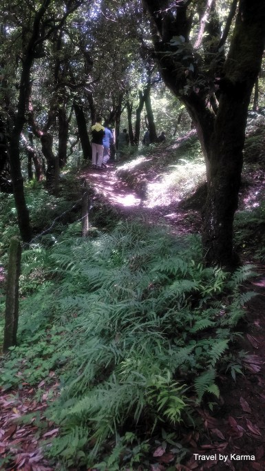 The first half of the trek was through dense forest, narrow mud path that became slippery due to rain and was intespread with small streams