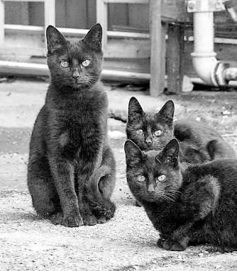 black cats after photo