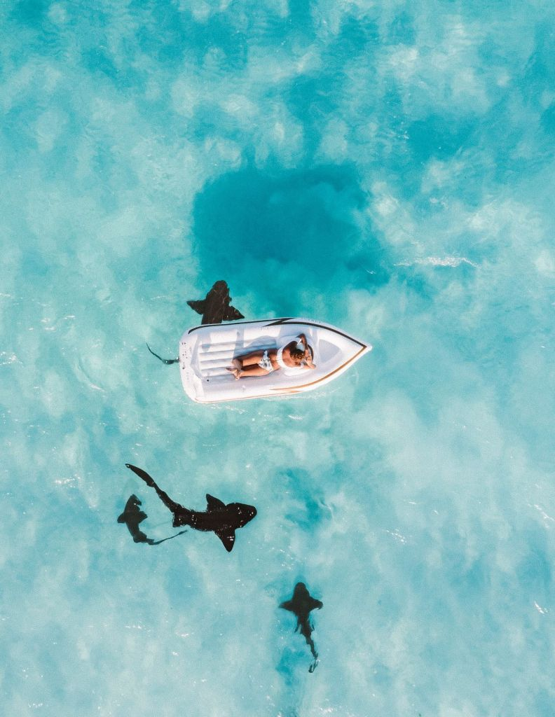 Looking down on a boat with sharks in the water.
