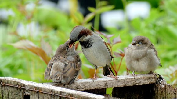 Photo by Andrea Lightfoot on Unsplash baby birds