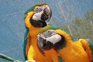 parrot-177390_1280