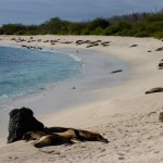 Sea Lions on a Beach