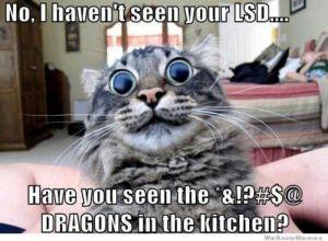 Funny-Cat-Meme-Work-13