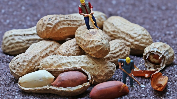 Sticking to Your Rate in a Market With Writers Willing to Work for Peanuts By Lindsay Pietroluongo