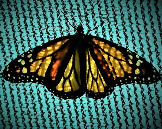 Buttefly and Pattern