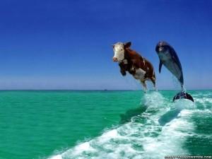 cowflying