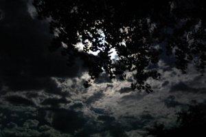 night_sky_by_petr28