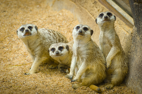 How your Peer Group Can Help your Writing