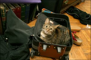 A cat in a suitcase! How adorable!