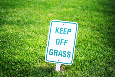 Something about the grass