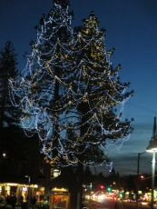 Lit Tahoe Tree