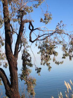 Tree, Sky & Water