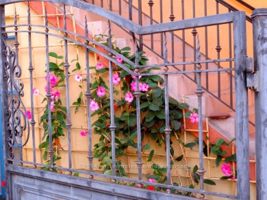 Gate with FLowers