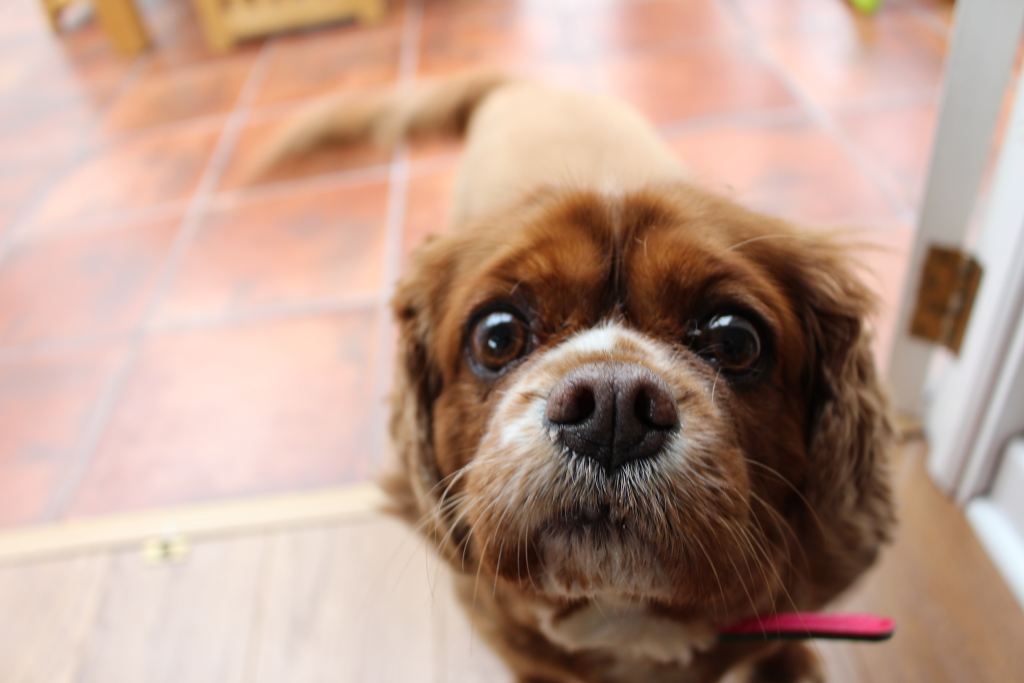 save money on your dog | save money on pet care