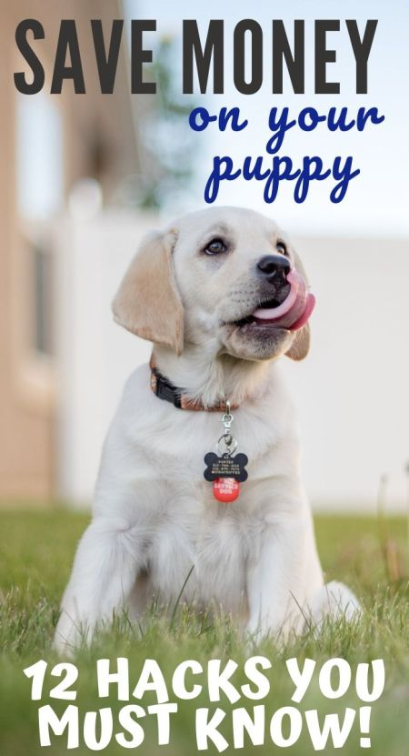save money on your puppy / save money on pet care