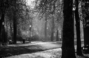 autumn-parc-black-and-white