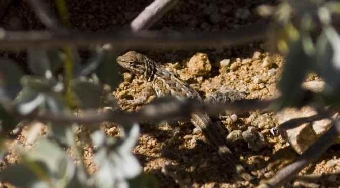 Sonoran Desert in the Springtime