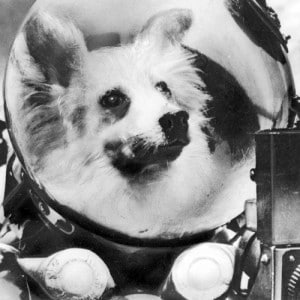 Space dog, Kozgawka, in training in a tailor-for-dogs helmet.