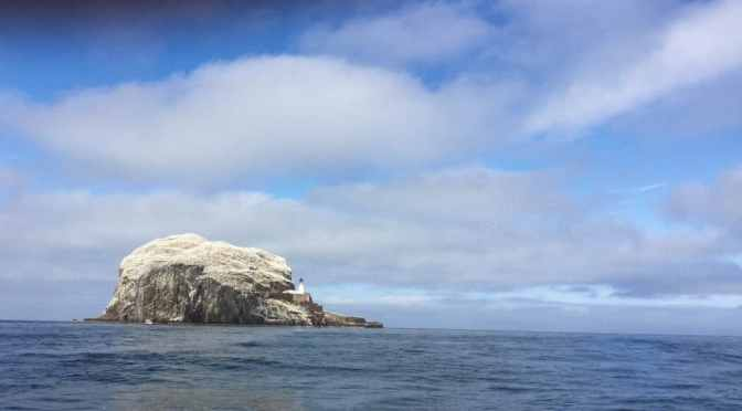 Craigleith and Bass Rock: a wonder of birds