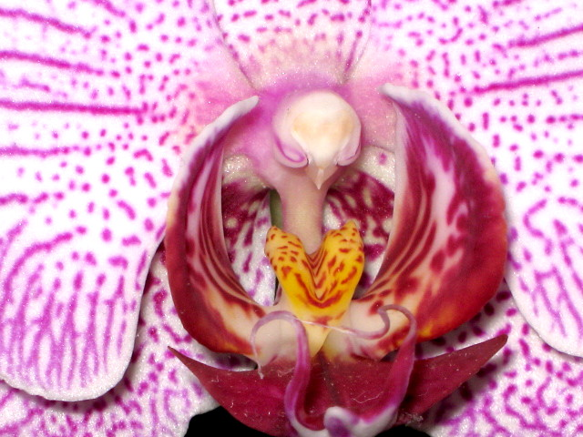 Bee\'s eye view of an orchid