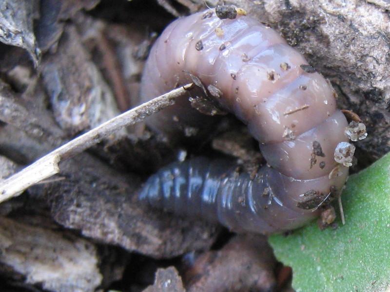 earthworm_091101