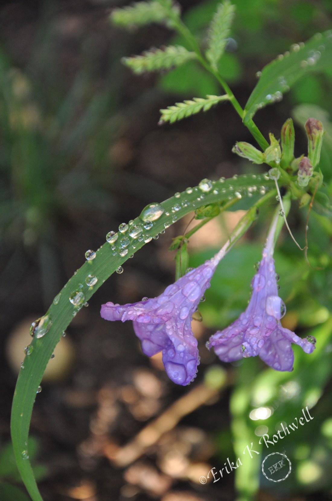 flower with dewdrop