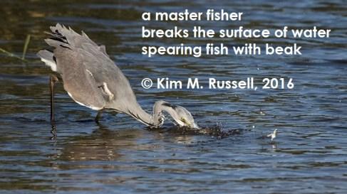 Master Fisher 2