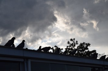 I think the Mufasa pigeon was telling the Simba pigeon not to go the shadowy place in the valley.