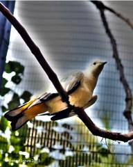 Bird butt
