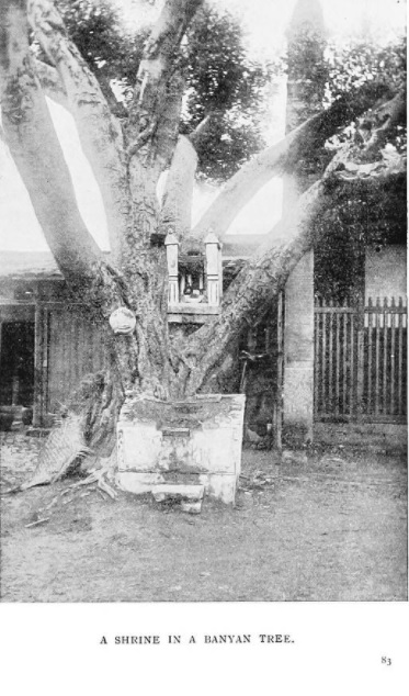 Shrine in a Banyan Tree - from Mary Darleys book