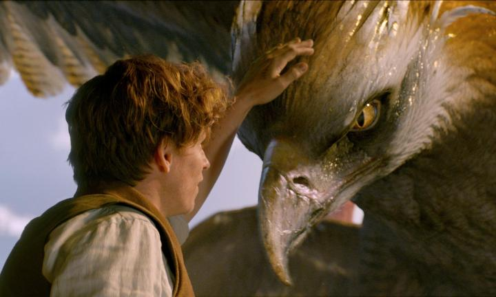 fantastic-beasts-and-where-to-find-them2