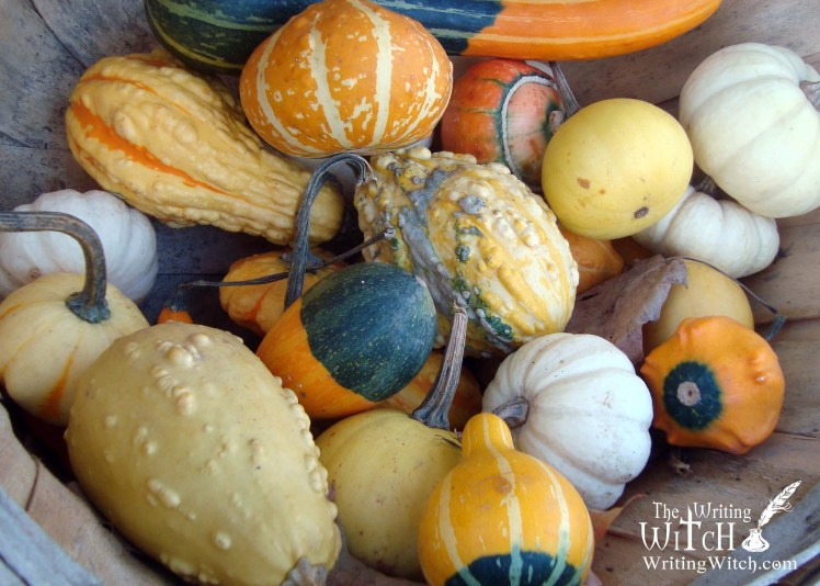 squashes pumpkins and gourds for fall