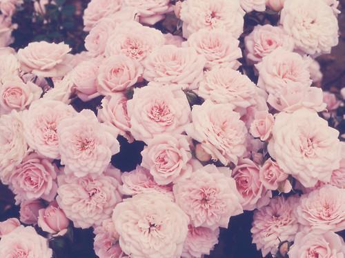 """""""Happy Valentines Day ___"""""""